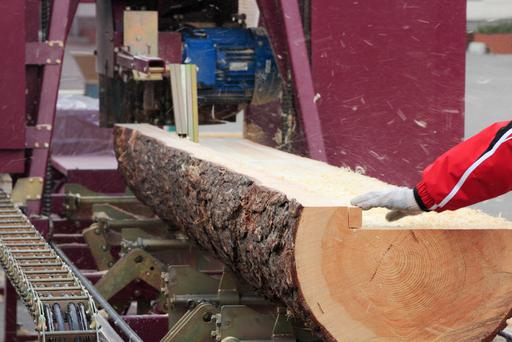 Only 50pc of each tree can be processed for sawn timber products