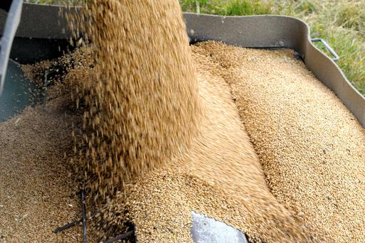 Tariff fears have caused a surge in barley exports from the UK. Pic: REUTERS/Mike Sturk