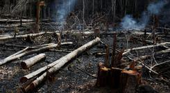 A tract of Amazon jungle burns as it is being cleared by loggers and farmers in Novo Airao, Amazonas state, Brazil August 21, 2019. REUTERS/Bruno Kelly