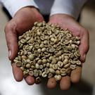 A worker shows coffee green beans at coffee company Simexco Dak Lak Limited in the town of Di An in Binh Duong province, Vietnam July 8, 2019. Picture taken July 8, 2019. REUTERS/Yen Duong