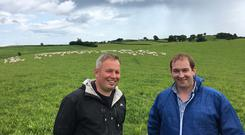 Dale Orr and Andrew Thompson discussing the performance of lambs grazing 30 acres of herbal leys on Dales farm near Strangford Co Down.