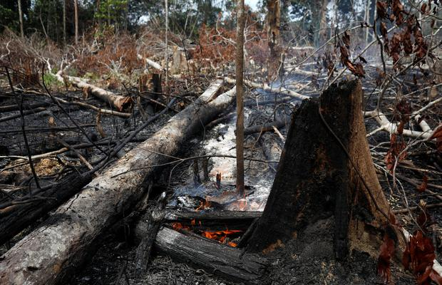 Burning issue: A tract of the Amazon rainforest smoulders and burns as it is cleared by loggers and farmers in Amazonas state, Brazil. Photo: Reuters