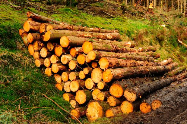 Companies that ran a portfolio of Irish forestry funds have earned millions of euro from work they carried out for investment schemes which last week left many Irish investors disappointed with returns after they were sold a decade early. Photo: Roger Jones
