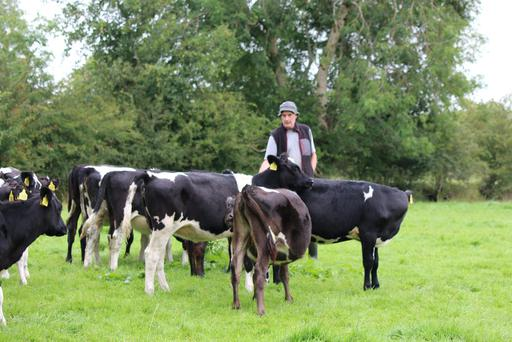 Branching out: Sean Conway with some of the heifers he is contract-rearing on his farm in Sligo