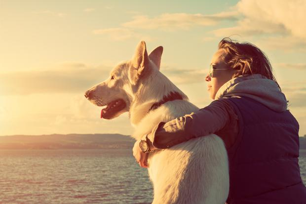 'Dogs are great company. We all know that.' Stock image