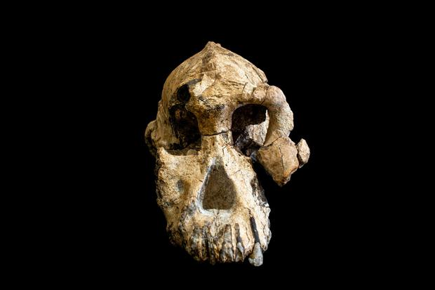 In watershed discovery, skull of ancient human ancestor unearthed