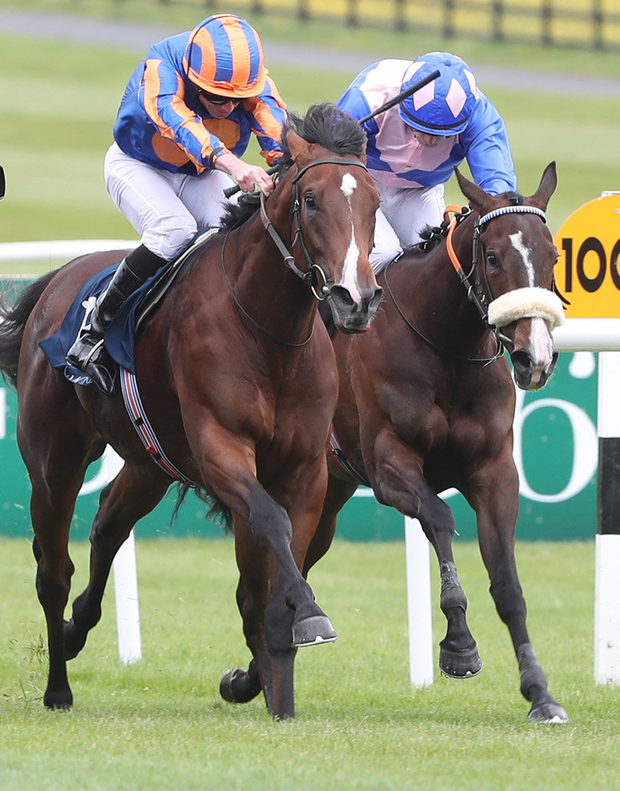 Windham Belle (r) in action at Naas is tipped to win at Cork tomorrow