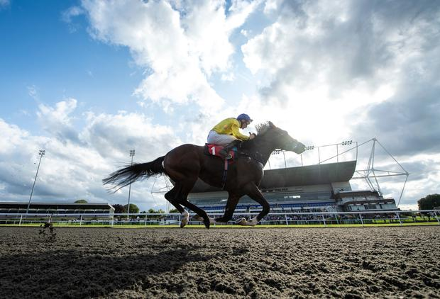 Dubai Warrior can score at Chelmsford today