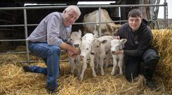 Thriving: Patrick Howard and his son Patrick Jnr with the four surviving calves. Photo: Domnick Walsh