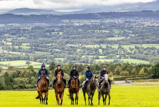 Ruby Walsh on Glen Of Aherlow, AP McCoy, on Moment In History, Paul Carberry on Punches Cross, Charlie Swan on Shadow Seven and Joseph O'Brien on Abyssinian last week. Photo: Morgan Treacy/INPHO