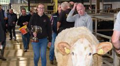 Eyes on the prize: Rachel Gallagher with her prize-winning heifer at the Milford Show and Sale. Photo Clive Wasson