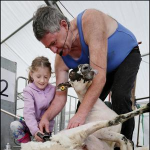 Sheep Shearer George Graham showing Aisling Murphy (8) from Ennis, Co Clare his craft at National Ploughing Championships in Fenadh Co Carlow. Picture by David Conachy