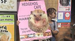 There were signs for animal cafés featuring hedgehogs, hamsters, weasels and all other manner of vermin