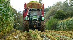 Contractor Alan Lucas harvesting for the first time this year. The maize crop on Patsy Nolan's farm in Morterstown Co Carlow was sown under film and yielded up to 26T/A. Photo Roger Jones.