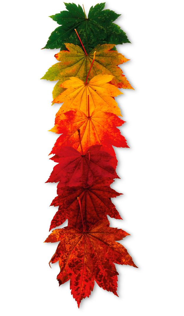 Seasonal colours are not signs of deterioration but of detoxing and preparing for a new beginning