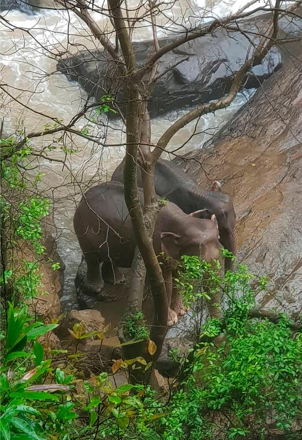 Two elephants are seen stuck on the edge of the Haew Narok Waterfall in Khao Yai National Park, Nakhon Nayok, central Thailand. (Department of National Parks via AP)