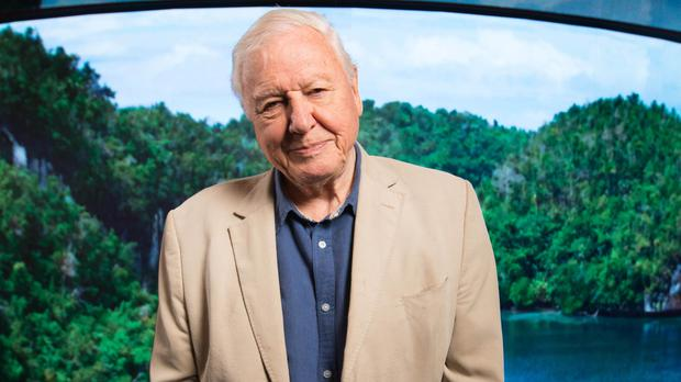 Sir David Attenborough on challenges and 'variety of life' shown in new series (David Parry/PA)