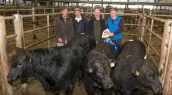 The best pen of three Limousin cross bulls at a weanling show & sale in Corrin Mart, Fermoy are pictured with judge Billy Finn, Glounthaune, Michael Ryan, mart committee, owner Cornelius O'Brien, Ballyduff Upper, Co Waterford and Pat Corbett, Mayo Health Care (sponsor). Photo O'Gorman Photography.