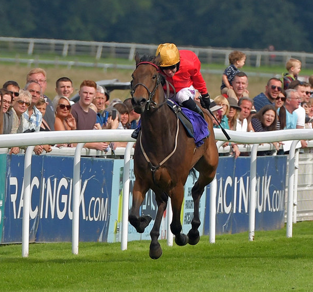 OPTION: Equiano Springs. Pic: Martin Lynch