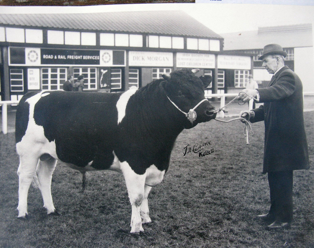 Stock man: Pat McCullough showing one of the prize-winning stock bulls from his Elmgrove herd of pedigree Friesians at the Spring Show in the RDS, Dublin