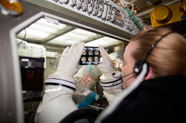 Astronaut Kate Rubins examines hiPSC-derived cardiomyocytes grown within a fully enclosed cell culture plate aboard the International Space Station. New research suggests heart muscle cells derived from stem cells have the ability to adapt to their environment during and after spaceflight. Photo: NASA/PA Wire