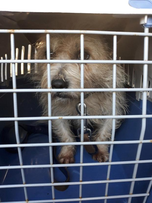Revenue seize 4 puppies and a young dog in Dublin Port