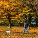 New leaf: Michael Keane with his dog Scotty out for a Sunday morning walk amongst the bright autumnal colours in Blackrock, Cork. Photo: David Creedon