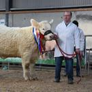 Junior star: Martin Ryan of Copperfield House, Cabra, Thurles, Co Tipperary with Goldstar Osanna, Junior Champion at the Irish Charolais Cattle Society Premier Show and Sale of heifers at GM Mart, Tullamore on Saturday. She sold for €11,000 for export to Northern Ireland