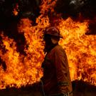 A CFA Member works on controlled back burns along Putty Road on November 14, 2019 in Sydney, Australia. Photo by Brett Hemmings/Getty Images