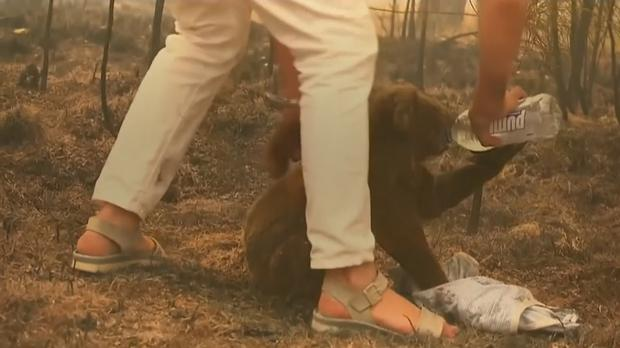 Woman walks into wildfire to save badly burnt koala