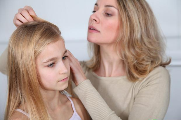Nit-picking: Parents of school pupils of all ages are being encouraged to check their hair