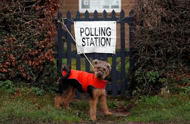 A dog is pictured at a polling station during the general election in Northumberland, Britain, December 12, 2019. REUTERS/Lee Smith
