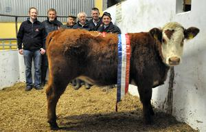 The Irish Hereford Show and Sale at the Livestock Mart at Newport, Co Tipperary