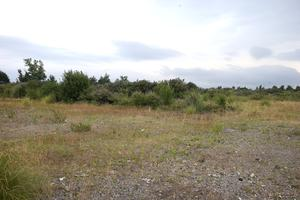 The old irish glass bottle site which the garda have searched after an allegedly rape took place. Picture credit; Damien Eagers 19/7/2016