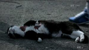 The shooting of a cat in the drama Love/Hate sparked outrage when it was broadcast