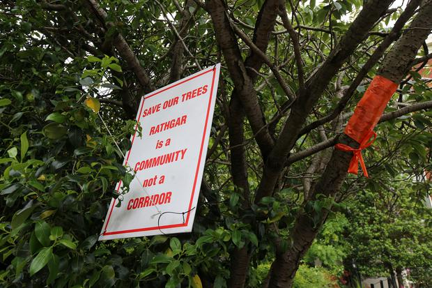 Protest over threat to trees on Rathgar Road