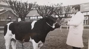 Different times: Eamon McCullough showing one of his pedigree Friesian bulls at the RDS Spring Show in the late 1960s