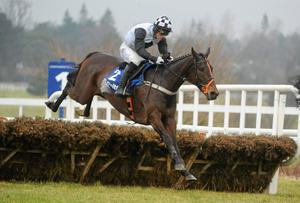 Dunguib, ridden by Brian O'Connell