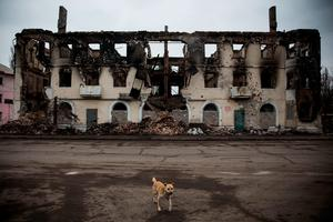 A dog runs past a destroyed building on March 2, 2015 in Uglegorsk, Ukraine. In a new report the United Nations announced over 6,000 people have been killed since the armed conflict started last April (Andrew Burton/Getty Images)