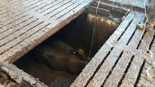 Northern Ireland Fire and Rescue Service picture of the rescue of three cows who had fallen into a slurry tank at a farm oustide Dromore, Co Down.