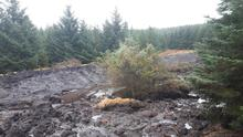 The scene at Mount Eagle after a landslide last week that swept trees and earth downhill, before stabilising. It is feared that heavy rains could cause further slippage