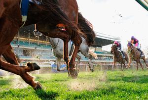Horse races in Britain will have a limited number of runners when it resumes. (stock photo)