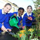 Students from Mercy Primary in Birr, Co Offaly, (l-r) Alexia Albu, Alicia Hansbury Atomori and Emily Molloy water flowers in a tractor tyre planter. Photo: Kevin McNulty