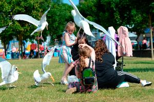 Ellie Comey (6) from Coolock under attack from the seagulls in Howth. Photo: Justin Farrelly.