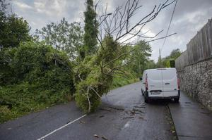 Fallen trees on the Lee road, Cork following Storm Ellen. Pic Daragh Mc Sweeney/Provision
