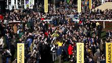 'We've taken up the English baton and indulged in hysterical Cheltenham bashing here too.'