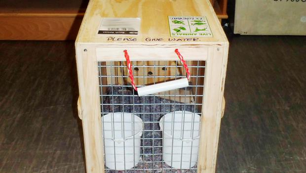 Undated handout photo issued by the National Crime Agency (NCA) of a crate to carry animals which Scott Parker used tried to smuggle heroin into the UK and has been jailed for seven-and-a-half years. PRESS ASSOCIATION Photo. Issue date: Friday June 19, 2015. Parker, 43, used a pet transportation business as a cover for smuggling the high-purity drug, stashing it inside the crates used to carry the animals. The discovery was made when staff at Heathrow Animal Reception Centre noticed that the pens were unusually heavy. See PA story COURTS Heroin. Photo credit should read: National Crime Agency/PA Wire  NOTE TO EDITORS: This handout photo may only be used in for editorial reporting purposes for the contemporaneous illustration of events, things or the people in the image or facts mentioned in the caption. Reuse of the picture may require further permission from the copyright holder.