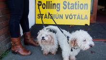 A woman and two dogs are seen outside a polling station during Ireland's national election in Dublin, Ireland, February 8, 2020. REUTERS/Phil Noble