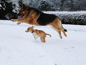 Buddy and Princess playing in the snow in Co Meath today Credit: Emma Rowley