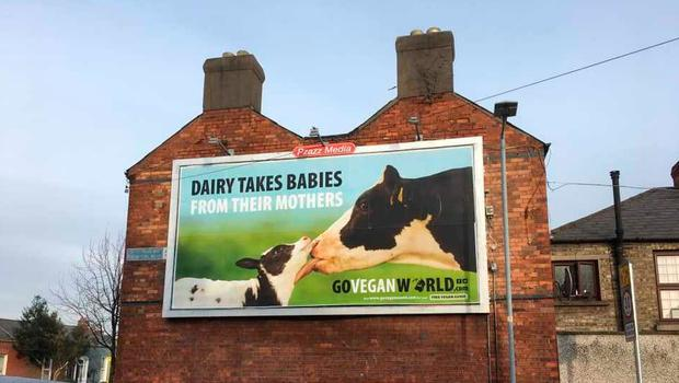 SUCCESSFUL: One of the Go Vegan World posters